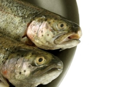 Fresh Fish vs. Canned Fish 1