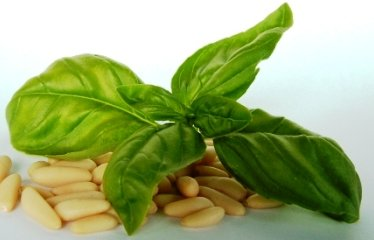 Things You Should Know About Basil 1