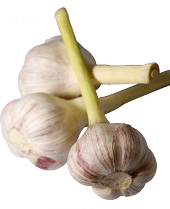 What Everybody Ought To Know About Garlic