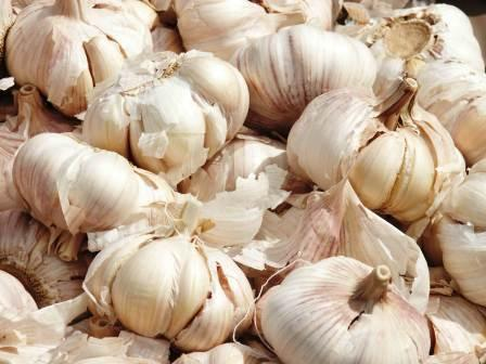 What Everybody Ought To Know About Garlic 2