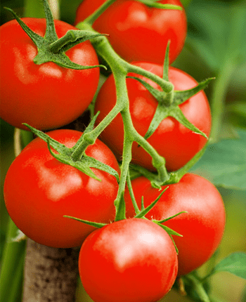 The Healthy Goodness of Tomatoes in the Mediterranean Diet