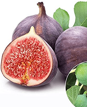 Figs in the Mediterranean Diet – Why You Need It
