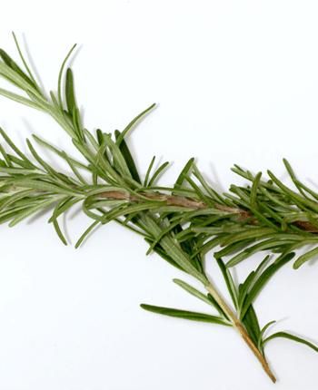 The Many Health Benefits of Rosemary